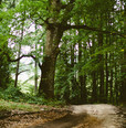 80c39702-nature-forest-trees-path_036038036038000000